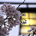 Gion Cherry Blossom by GayeL Art