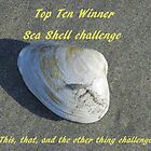 Top Ten Winner - Sea Shells by quiltmaker