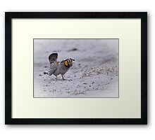Prairie Chicken 2013-3 Framed Print