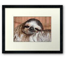 Buttercup the Sloth Framed Print