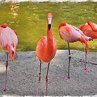 Flamingo by Infinite2000