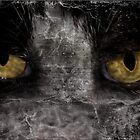 Cat's Eyes by Crista Peacey