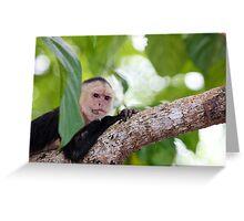 White Faced Capuchin  Greeting Card