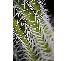 Up Close and Spiny Photographic Print