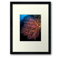 Red Fan Coral Framed Print