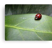 Ladybird on a leaf Canvas Print
