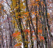 Autumn forest by Paul Malandain