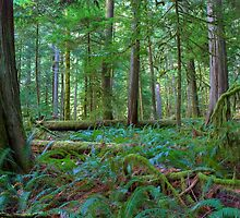 Cathedral Grove - Ancient Forest by JamesA1