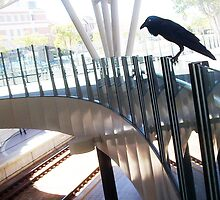 Vaguely A Huge Crow On A Translucent Glass Fence Attempting To Intimidate by Robert Phillips