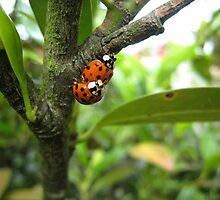 Ladybirds by LeJour