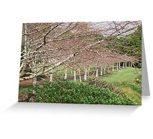 Auckland's winter cherry blossoms Greeting Card