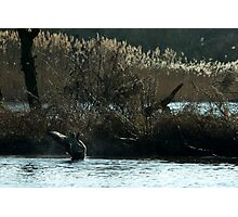 Morning shower for the Canada Goose Photographic Print