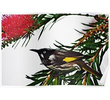 The Honey Eater Poster