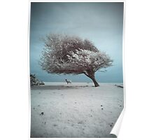 Spring Snow Poster