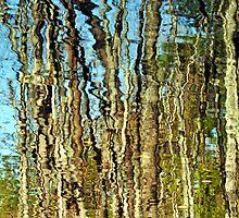 Treeflection at Salem Pond by Caleb Ward