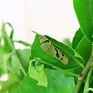 Caterpillar by Steve Small