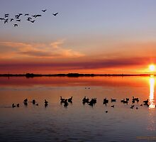 Gathering Geese in the Gloaming by Larry Beat