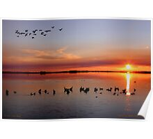 Gathering Geese in the Gloaming Poster