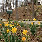 Country Daffodils by Lynn Gedeon