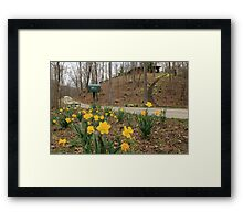 Country Daffodils Framed Print