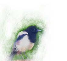 Scratchy Painting of a Scruffy Magpie by astralsid