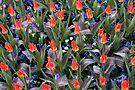 Spring garden - Keukenhof by Jo Nijenhuis