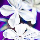 Jasmine! by MoTakesPhotos