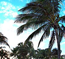 South Beach Palm Trees - Miami Photography Print by WayfarerPrints