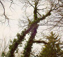 X-tree by Richard Eijkenbroek