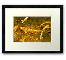 Fish in gold Framed Print