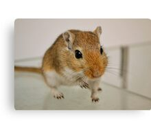 Gerbil cuteness Canvas Print