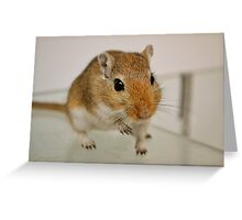 Gerbil cuteness Greeting Card