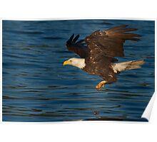 Incoming Bald Eagle Poster