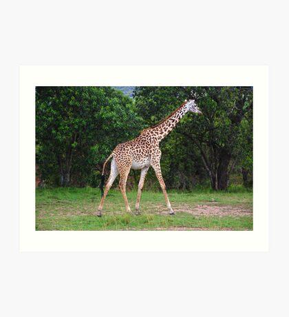 Giraffe - Masai Mara - Kenya Art Print