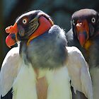 King Vulture  by Johanna26