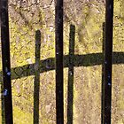 Railing Shadows On Tree Bark In The Springtime Sun by Jazzdenski