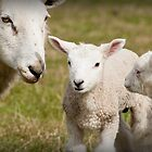 Two lambs and Ewe by Ralph Goldsmith