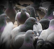 Pigeonsss... by rasim1
