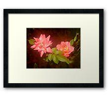 Rosey Glow Framed Print