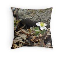 Rue Anemone Wildflower - Thalictrum thalictroides Throw Pillow