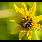 Busy Bee by KeithBanse