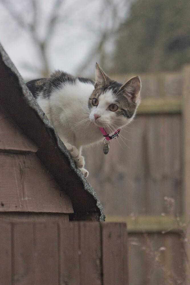 Exploring Kitten by RoryMackenzie