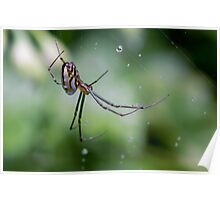 Spiders have jewels on their legs Poster
