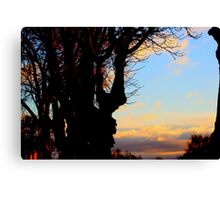 A Beautiful sunset across  Trees Canvas Print
