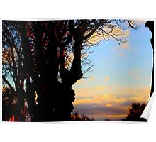 A Beautiful sunset across  Trees Poster