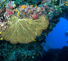 Diver and Fan Coral by Karen Willshaw