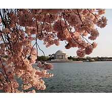 Jefferson Memorial and Cherry Blossoms Photographic Print