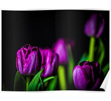 Bundle of Tulips Purple Poster
