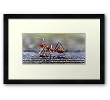 Fire Ant Framed Print