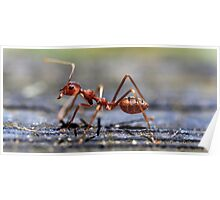 Fire Ant Poster